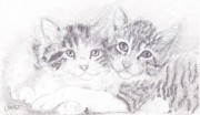 Sisters Drawings - Kitties by Caitlin  Wells