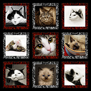Domestic Cats Digital Art - Kitty Cat Tic Tac Toe by Andee Photography