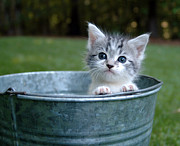 Cute Kitten Photo Posters - Kitty in a Bucket Poster by Jt PhotoDesign