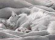Cat Art Drawings Prints - Kitty in the Covers Print by Suzanne Schaefer