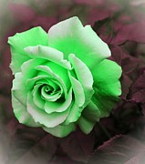 Kiwi Digital Art Prints - Kiwi Lime Rose Print by Barbara Griffin