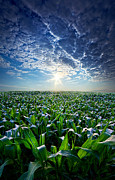 Phil Koch - Knee High in July