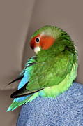 Terri  Waters - Knee Preen Pickle