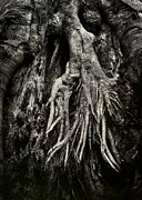 Tree Roots Photo Metal Prints - Kneeling at the Feet of the Green Man Metal Print by Rebecca Sherman