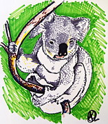 Koala Drawings Posters - Koala Poster by Andrea Keating