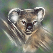 Koala Paintings - Koala At Rest by Jackie Flaten