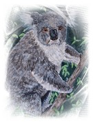 Koala Paintings - Koala Bear Effects by Teresa  Peterson
