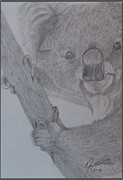 Portraits Drawings - Koala Bear by Melissa Nankervis