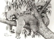 Koala Drawings Posters - Koala Family Poster by Bob Patterson
