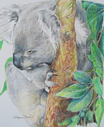 Koala Paintings - Koala Nap Time by Sharon Sorrels