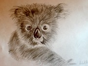 Koala Drawings - Koala by Robert Hubert