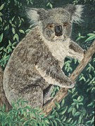 Koala Paintings - Koala by Teresa  Peterson