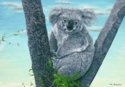 Conservation Of Wildlife Painting Acrylic Prints - Koala Acrylic Print by Tom Blodgett Jr