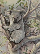 Koala Paintings - Koalas Retreat by Martin Lacasse