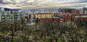 Kobe Garden Seattle Print by Steve Leach