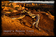 Slickrock Posters - Kodachrome Basin State Park - Angels Palace Trail Utah - HDR Poster by David Rigg