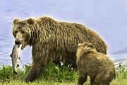 Tim Moore - Kodiak Bears