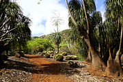 Cheryl Young - Koko Crater Botanical...