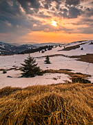 Pine Tree Photos - Kopaonik by Davorin Mance