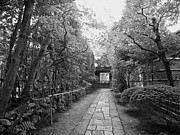 Bamboo Fence Prints - Koto-in Temple Stone Path Print by Daniel Hagerman