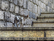 Stone Steps Prints - Kotor Kat Print by Douglas J Fisher
