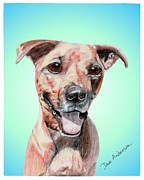 Animal Shelter Mixed Media - Kula - a former shelter sweetie by Dave Anderson