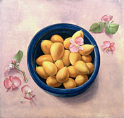 Pink Blossoms Posters - Kumquats and Blossoms Poster by Tomar Levine