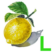 Lemon Art Prints - L Art Alphabet for Kids Room Print by Irina Sztukowski
