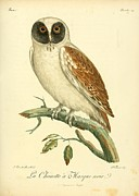 Audubon Drawings Posters - La Chouette a Masque Noir Poster by Philip Ralley