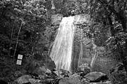 La Coca Falls Posters - La Coca Falls El Yunque National Rainforest Puerto Rico Print Black and White Poster by Shawn OBrien