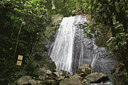 La Coca Waterfall Prints - La Coca Falls El Yunque National Rainforest Puerto Rico Print Cutout Print by Shawn OBrien