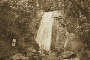 La Coca Waterfall Prints - La Coca Falls El Yunque National Rainforest Puerto Rico Print Vintage Print by Shawn OBrien
