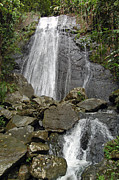 La Coca Waterfall Prints - La Coca Falls El Yunque National Rainforest Puerto Rico Prints Print by Shawn OBrien