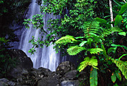 Tropical Rainforest Digital Art Prints - La Coca Falls Print by Thomas R Fletcher