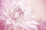 Delicate Mixed Media - La Dahlia by Angela Doelling AD DESIGN Photo and PhotoArt
