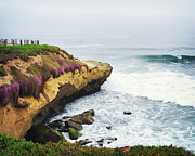 Pacific Ocean Prints - La Jolla Cliffs and Purple Flowers Print by Tanya Harrison