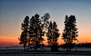 Orange Metal Prints - La Pine Sunrise Metal Print by Cat Connor