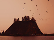 Most Photo Posters - La Push Silhouette With Birds Poster by Kym Backland
