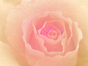 Spectacular Art - La Vie en Rose by Sweet Moments Photography