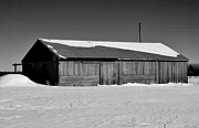 Daniel Thompson - Labo Rd. Barn BnW