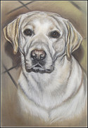 Retriever Pastels Posters - Labrado Retriever Poster by Irisha Golovnina