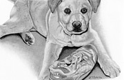 Hyper Realistic Drawings Prints - Labrador and Chow Chow Mix- Sneaker Snatcher Print by Sarah Batalka