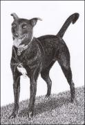 Pen And Ink Framed Prints Prints - Labrador  Mix Own Cee Print by Jack Pumphrey