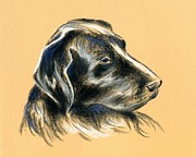 Retriever Pastels Posters - Labrador Retriever - Black Dog Pastel Drawing Poster by MM Anderson