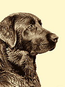 Labrador Retrievers Prints - Labrador Retriever Dog in Sepia Print by Jennie Marie Schell