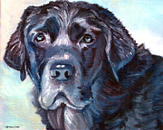 Lyn Cook - Labrador Retriever