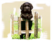 Black Lab Mixed Media - Labrador Retriever Puppy by Tori Beveridge