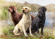 Canine Mixed Media Prints - Labrador Retrievers Print by Angelgold Art
