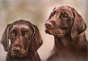 Chocolate Lab Drawings - Labrador Retrievers by Gail Dolphin