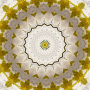 Lacy Floral Framed Prints - Lacy Daffodil Kaleidoscope Framed Print by MM Anderson